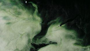 Zielony lód na Antarktydzie. Skąd się wziął?
